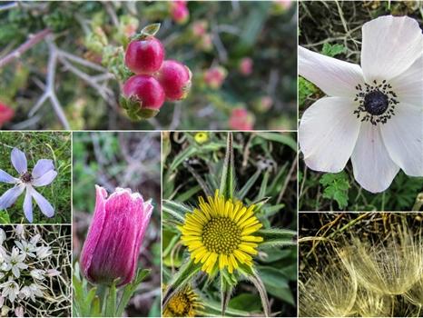 Cape Greco - Flora