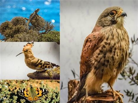 Cape greco fauna