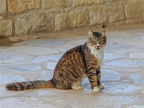St. Nicholas Cat Monastery - Cat