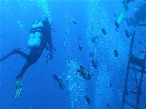 Diving Zenobia