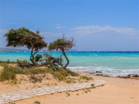 Makronissos Beach tree