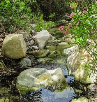 Akamas small stream and amazing flower