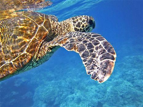 Lara beach sea turtles