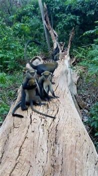 Monkey Sanctuary - Monkeys on a tree