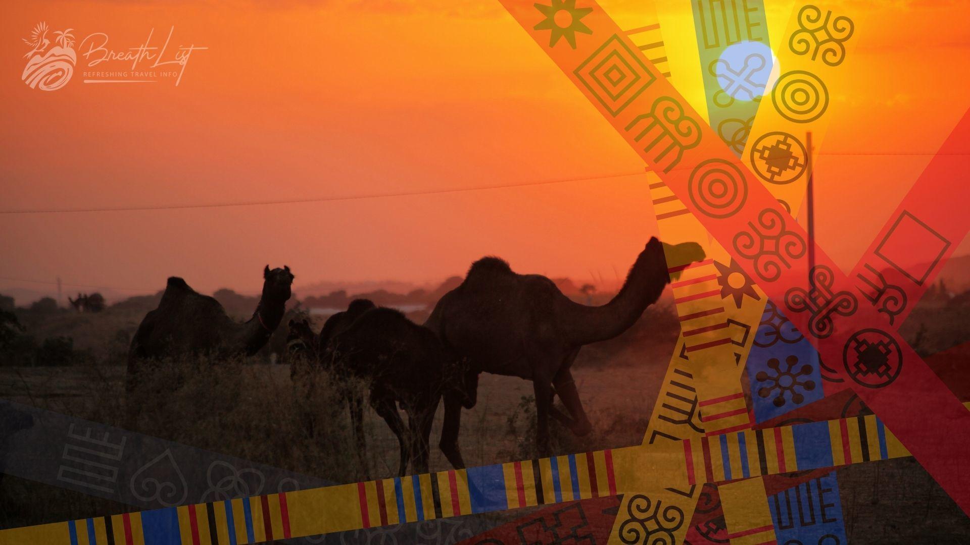 Gold merchant camels