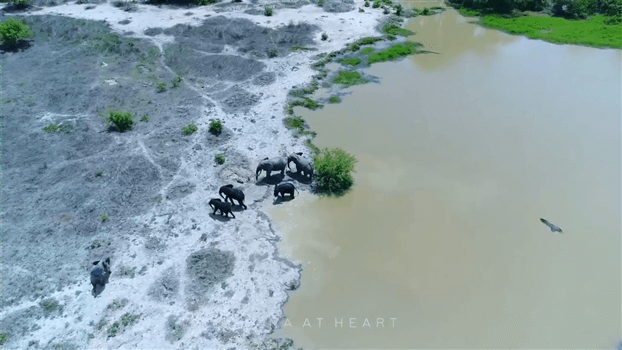 Ghana at Heart - Elephants at a water hole