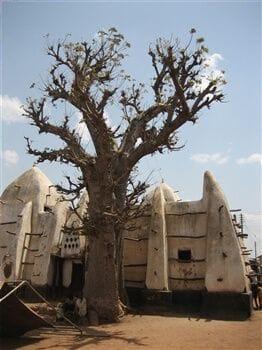 Baobab tree near the Larabanga Mosque